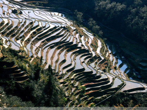 Malizhai Rice Terraces Scenic Area