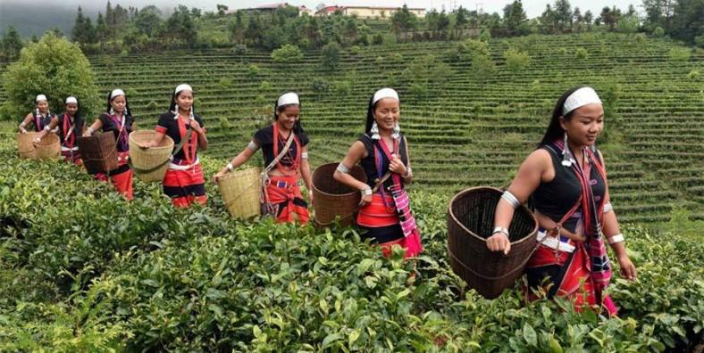 11 Days Southwest Yunnan Dianhong Black Tea and Puer Tea Culture Tour