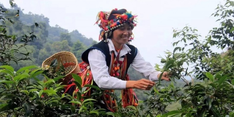 7 Days XishuangBanna and Puer Tea Culture Tour
