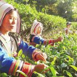 10 Days Best Yunnan Classic Tour with Dianhong Black Tea Culture Tour