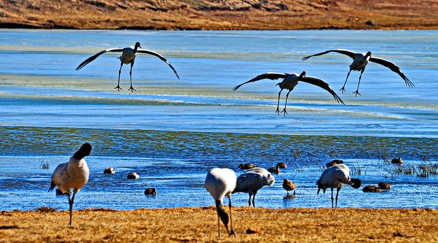 Dashanbao Black-necked Crane Nature Reserve, Zhaotong
