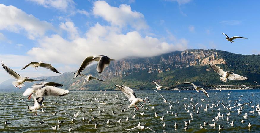 Dianchi Lake Bird-Watching in Kunming