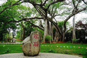 One Tree Forest in Ruili City, Dehong