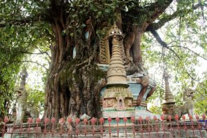 Tree-wrapped pagoda and Tower-wraped Tree in Mangshi City, Dehong