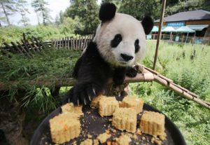 Yunnan Wild Animal Park, Kunming