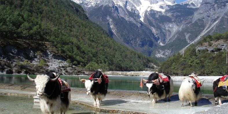 7 Days Kunming-Dali-Lijiang-Shangri-La Small Group Tour