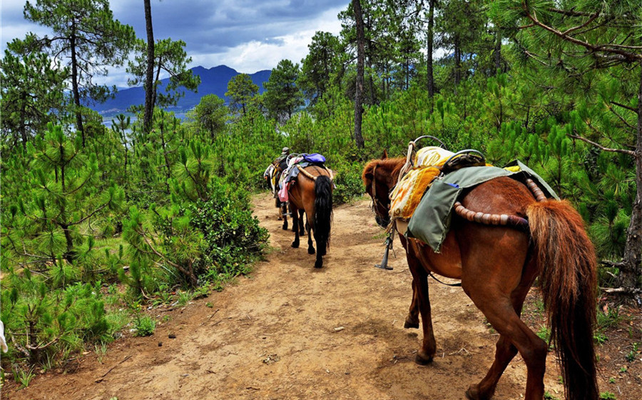 The Ancient Tea Horse Road Tourist Area in Puer