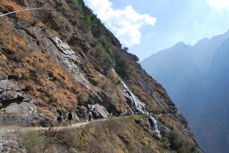 Bamboo Forest of Tiger Leaping Gorge