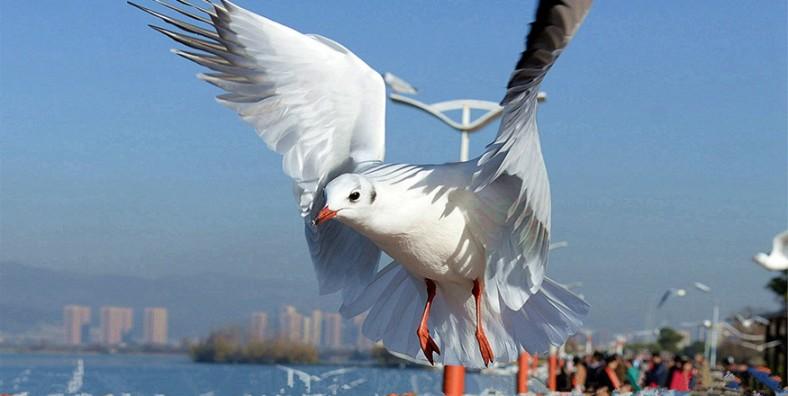 1 Day Kunming City Birding Tour
