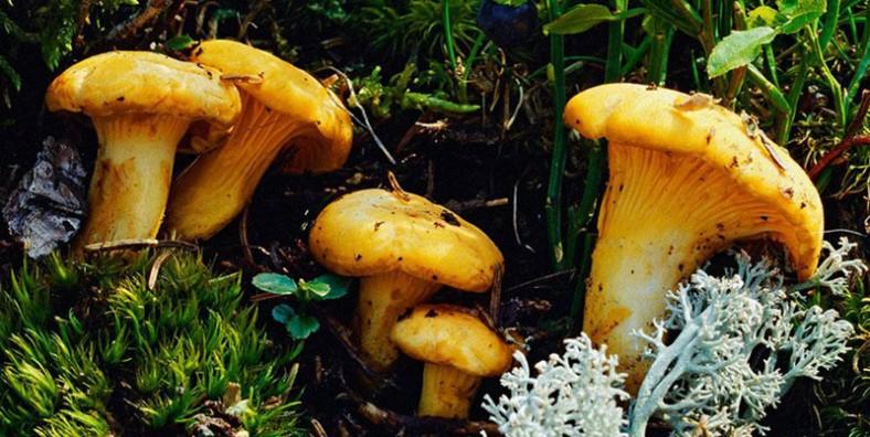 2 Days Nanhua Wild Mushroom Festival and Trade Fair Tour