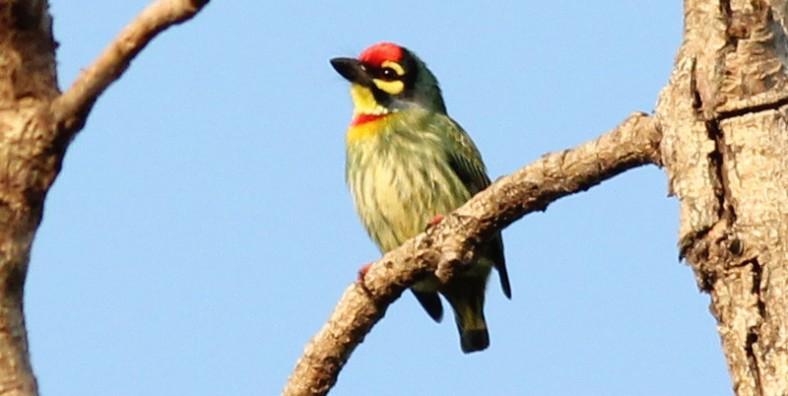 11 Days Northwest Yunnnan Bird Watching Tour