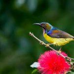 15 Days Southwest Yunnan Birding Tour
