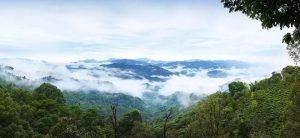 Guafengzhai Tea Plantation of Yiwu Mountain, XishuangBanna