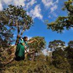 6 Days XishuangBanna Tropical Forest and Jingmai Ancient Tea Mountain Hiking Tour