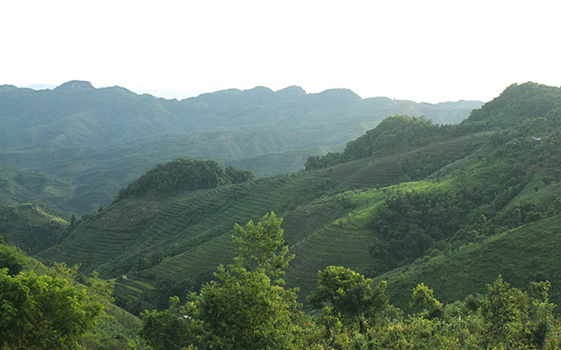 Kunlu Tea Mountain in Ninger County, Puer