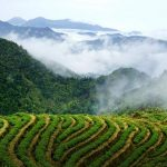 11 Days Dianhong Black Tea and Puer Tea Culture Tour in Yunnan