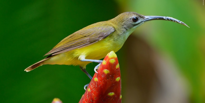 22 days Yunnan Birds Watching Tour