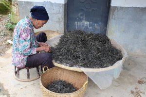 Wangong Tea Plantation in Mengla County, XishuangBanna
