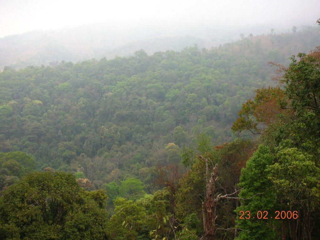 Yibang Tea Mountain in Mengla County, XishuangBanna