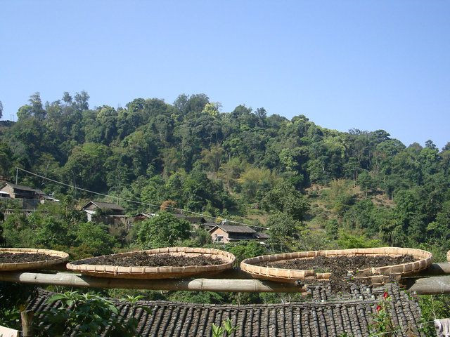 Yibang Tea Mountain in Mengla County, Xishuangbanna