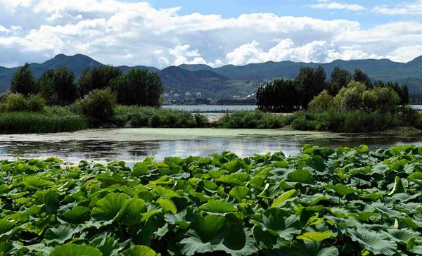 Yongchang Wetland of Dianchi Scenic Area in Kunming