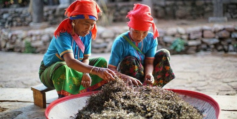 16 Days Southwest Yunnan Ancient Tea Culture Tour