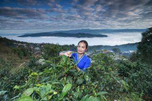 Jingmai Ancient Tea Mountain in Lancang County, Puer