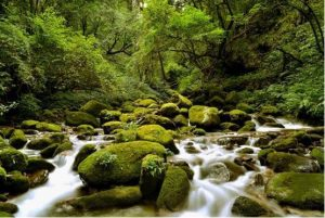 GaoliGongshan Mountain Hiking Tour