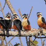 2 Days Yingjiang County Birding Tour