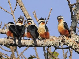 One Day Yunnan Birding Tour to Yingjiang Hornbill Valley