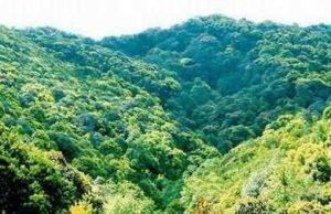 Dazhong Mountain Nature Reserve in Nanhua County, Chuxiong
