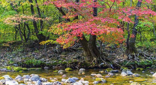 ErhegouPrimary Forest in Wenshan City