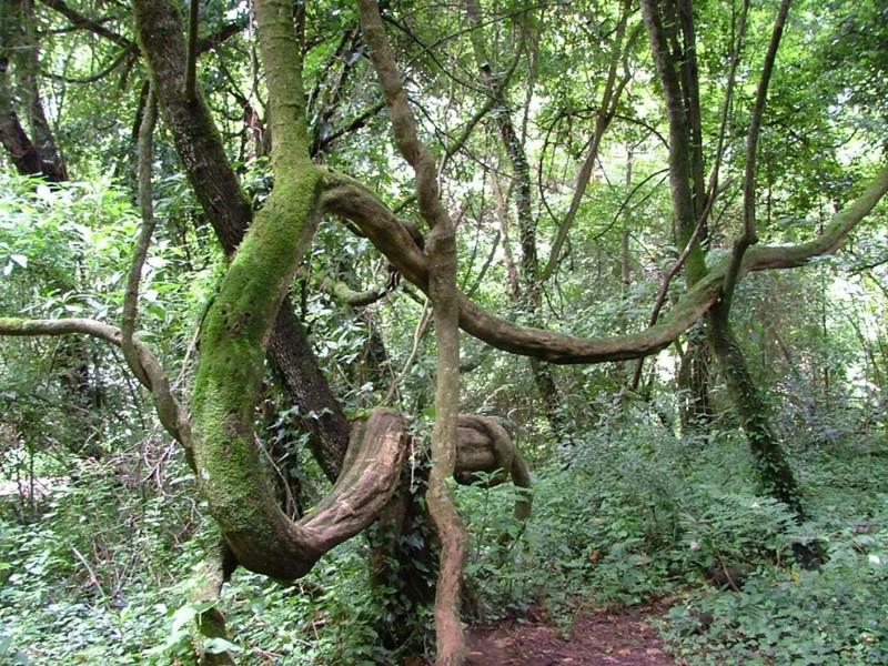 Guzhou Wild Forest in Xinping County, Yuxi