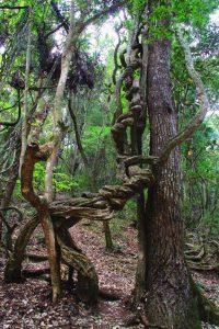 Guzhou Wild Forest in Xinping County