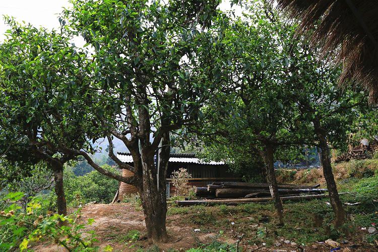 Nanpo Laozhai Village of Bingdao Village (Xibanshan) in Mengku Town, Lincang
