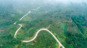 Niuluohe Tea Plantation in Jiangcheng County, Puer