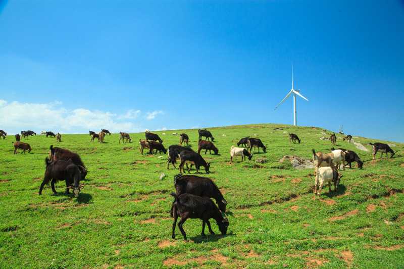 Shede Pasture in Qiubei County, Wenshan