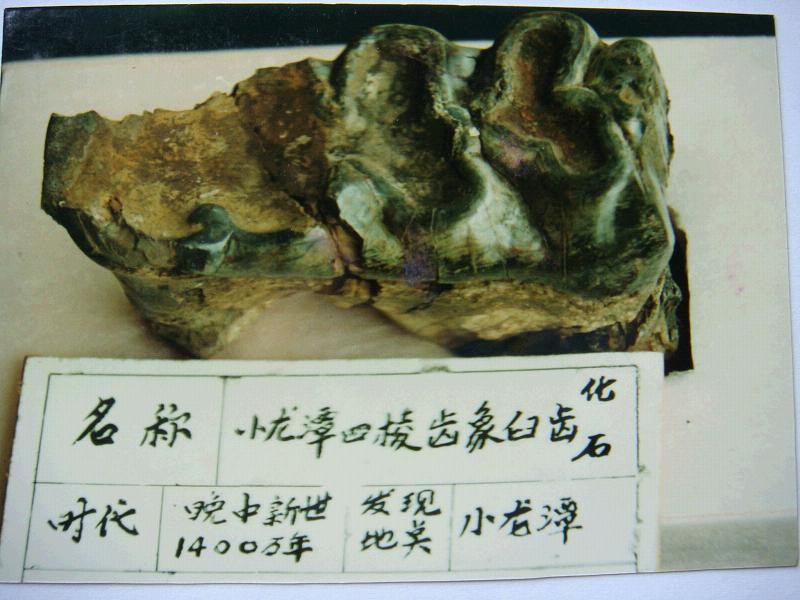Site of Lufeng Ramapithecus Fossils, Chuxiong