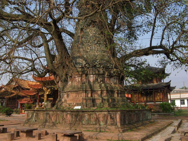 Tree-wrapped Pagoda and Pagoda-wrapped Tree in Mangshi City, Dehong