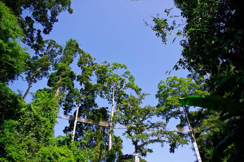 WangTianShu Scenic Spot in Mengla County,XishuangBanna