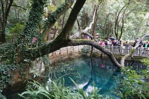 Butterfly Spring in Dali City