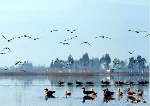 Caohai Wetland Park in Heqing County, Dali