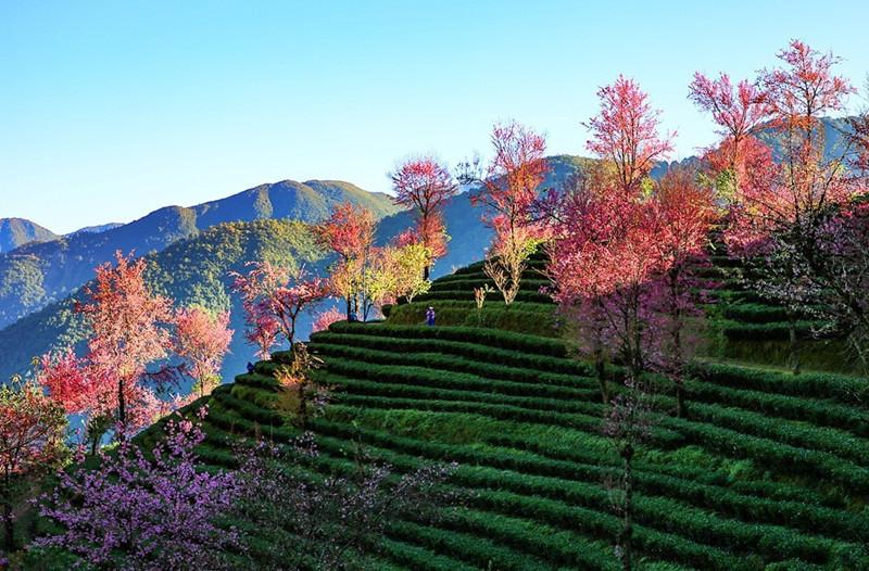 Cherry Blossoms Valley of Wuliangshan Mountain in Nanjian County, Dali