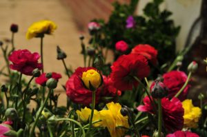 Dounan Flowers Market in Kunming