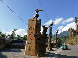 Hornbill Birding Tour in Yingjiang Hornbill Valley of Yunnan