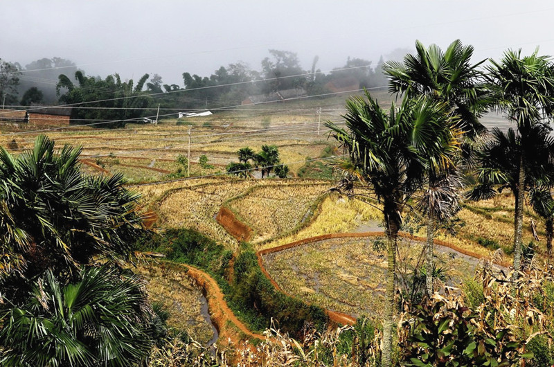 Jiayin Rice Terraces in Honghe County