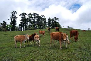 Lamaku Alpine Pasture in Lushui City, Nujiang