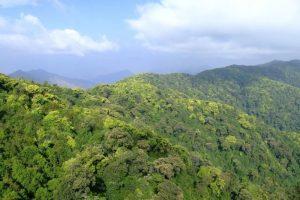 Lingbaoshan National Forest Park in Nanjian County, Dali