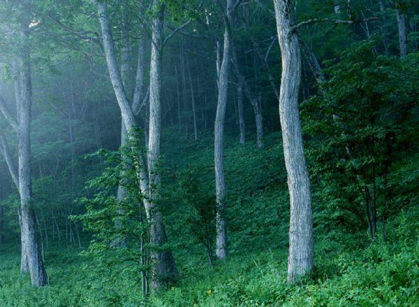 Meishucun Nature Reserve in Jinning District, Kunming