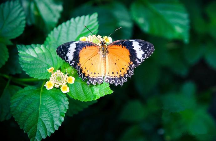 Mengyang Wild Butterfly Breeding Base in Jinghong City, XishuangBanna